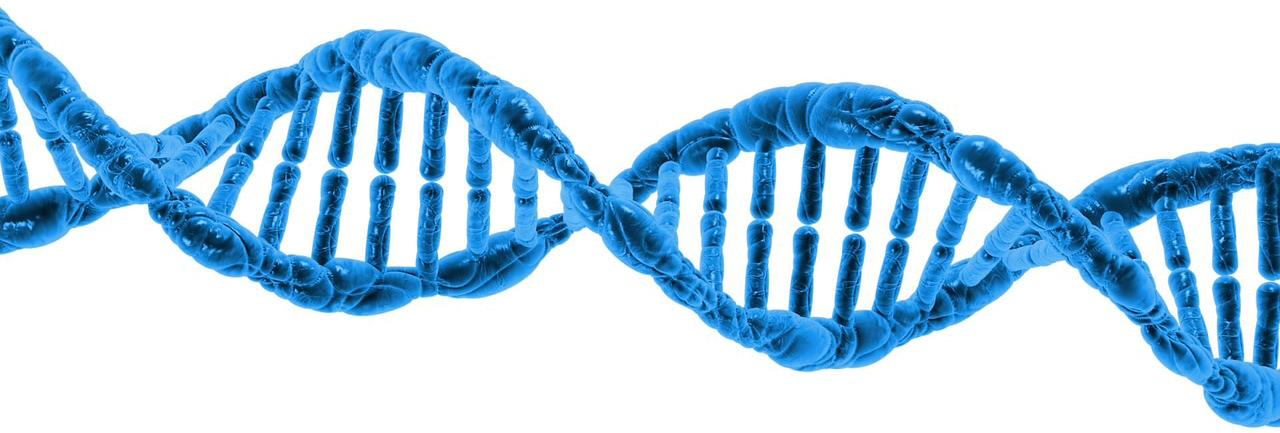 DNA-Y